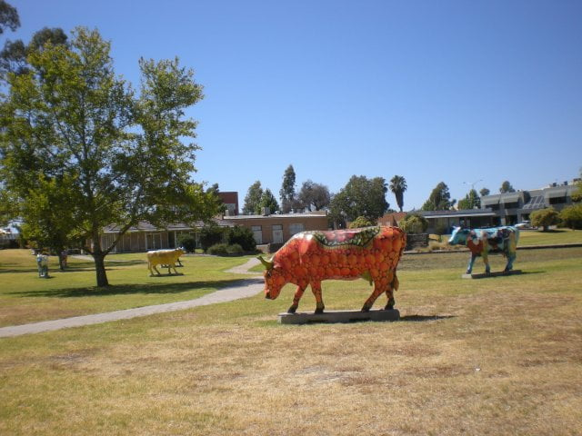 Shepparton - Painted Cows