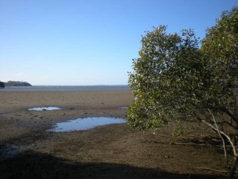 Nudgee Beach (15)