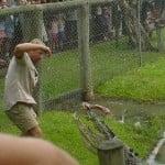 Steve Irwin feeds a croc