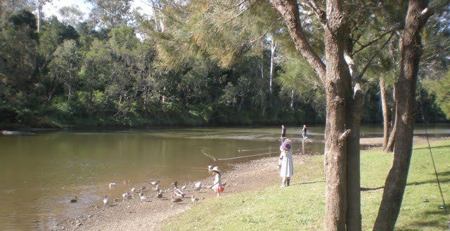 Ducks at Colleges Crossing, Brisbane