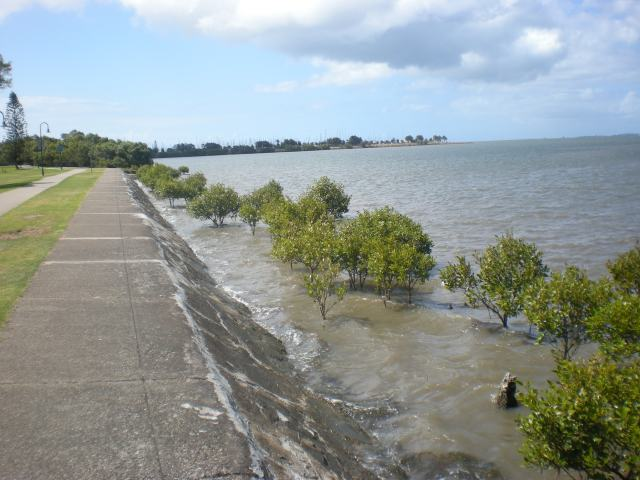 And even more mangrove
