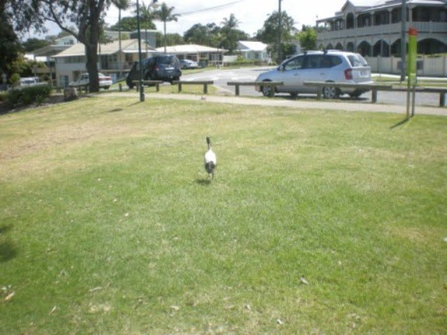 Ibis by the road