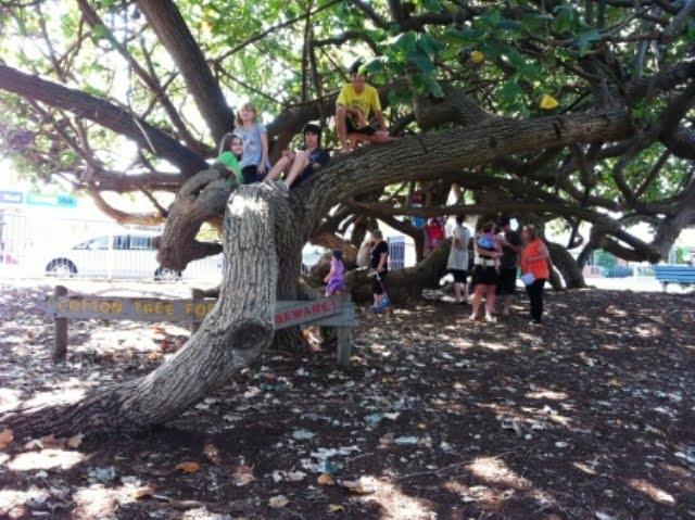 Humongous Tree