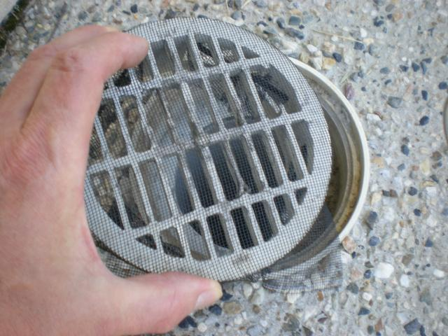 replace drain cover