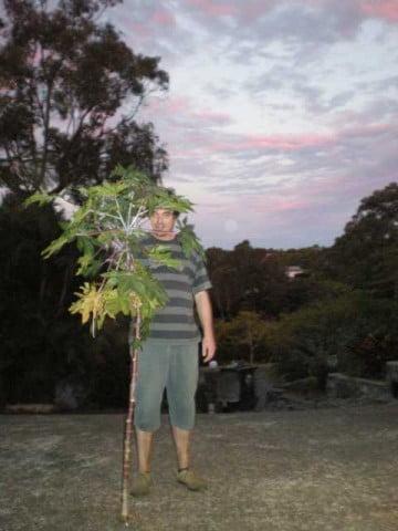 big weed