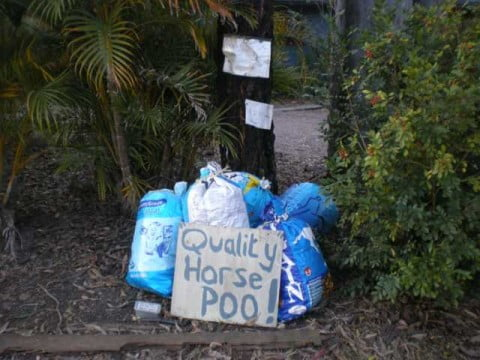 Quality horse poo