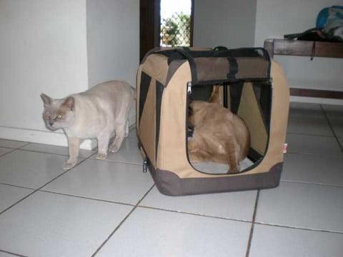Coco & Remy