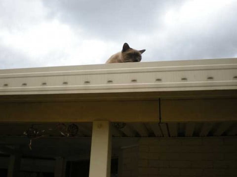 Coco on the roof again