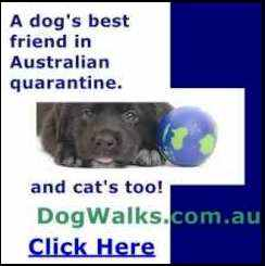 Dog walks and cat cuddles in Australian quarantine