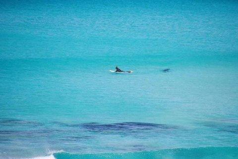 Shark Stalking