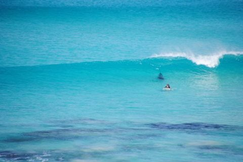 shark stalking 2
