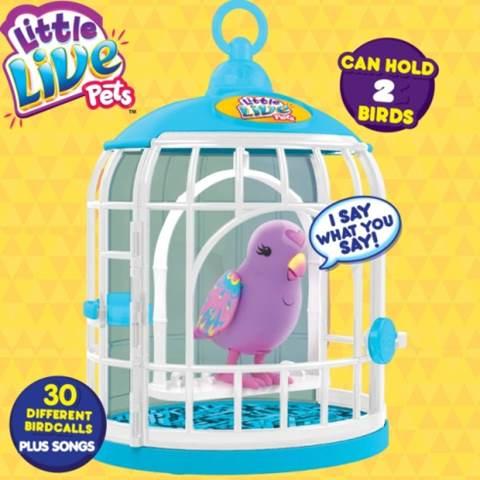 Bird & Cage
