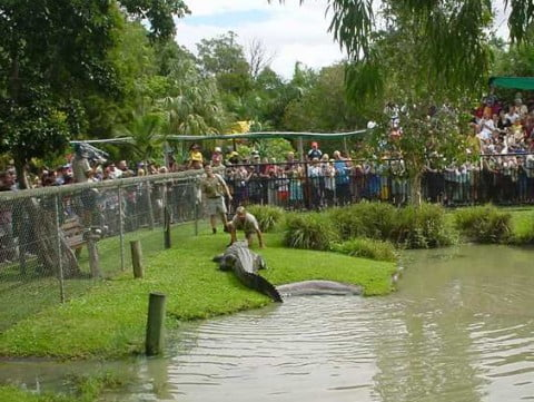 croc at Aus Zoo