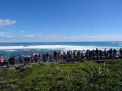 Watching the world surfing championships