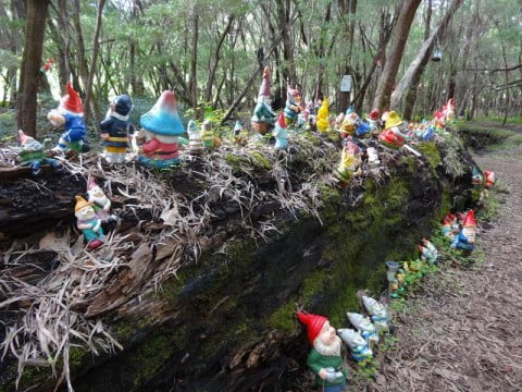 Gnomes on fallen tree
