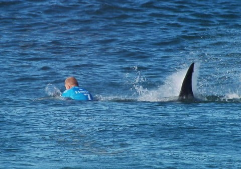 South Africa Surfer Shark Attack