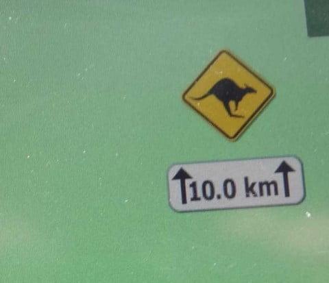 kangaroo warning 2