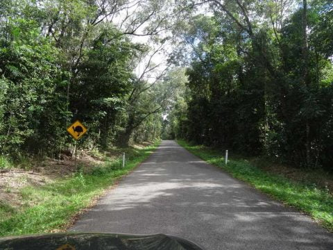 cassowary signs