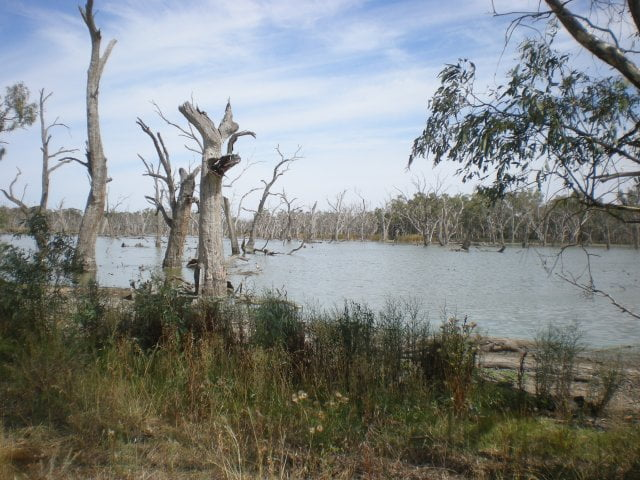 Gum Swamp in Forbes