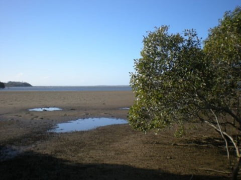 Nudgee Beach (15)