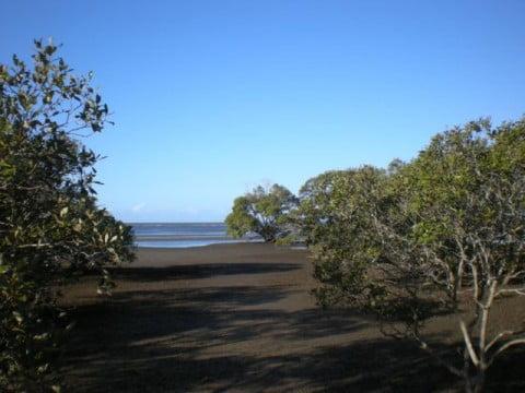 Nudgee Beach (16)