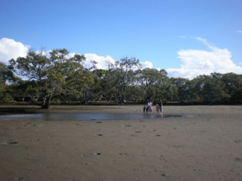 Nudgee Beach (5)