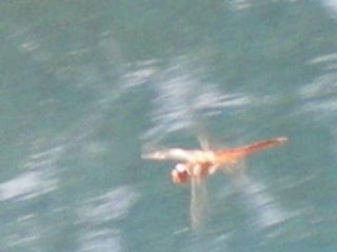 Dragonfly closer-001