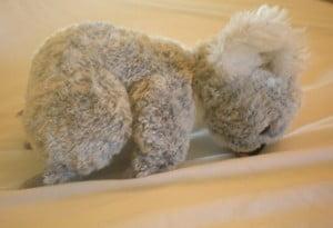 Doug the baby koala