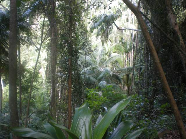 More rainforest