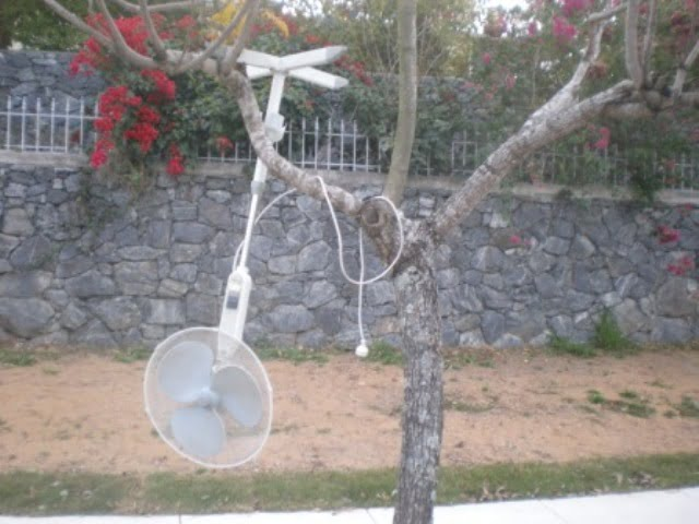 fan in a tree