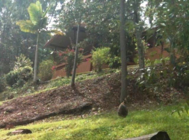 another suburban kangaroo