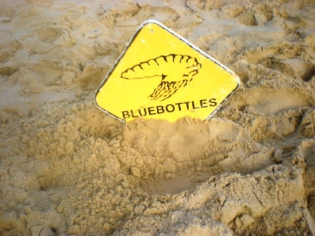 Bluebottles sign