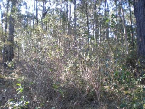 More bush