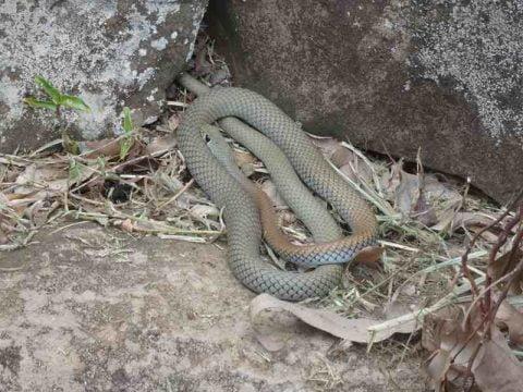 Snake Jan 2017-2