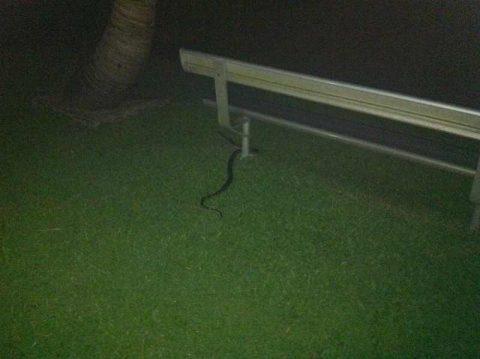 snake 2012-2