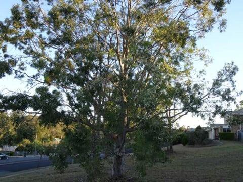 tree  (4)