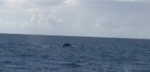 Whale sighting zoom