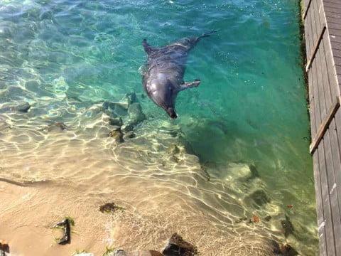 SeaWorld (1)