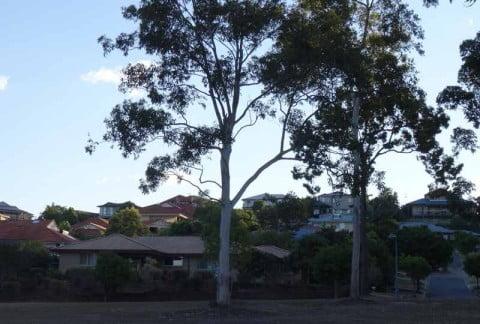 Western Suburbs Housing (19)
