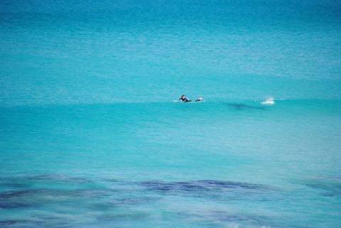 shark stalking 1