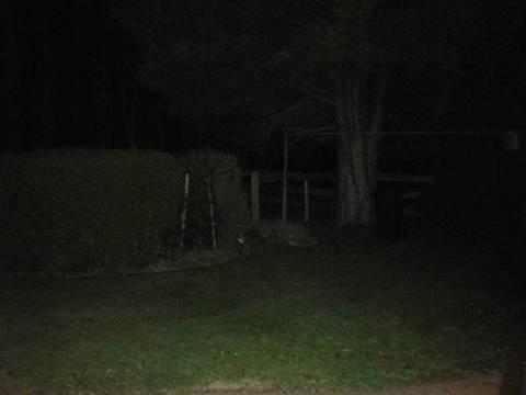Tassie back garden
