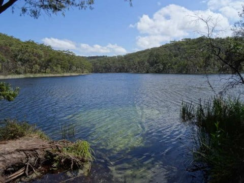 brown lake stradbroke