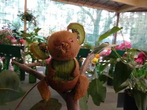 Lychee Koala