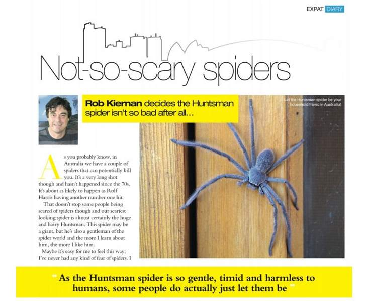 Liking the Huntsman Spider: Not-so-scary spiders
