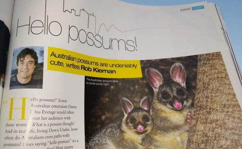 hello possums