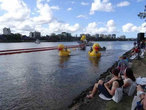 Duck race 2