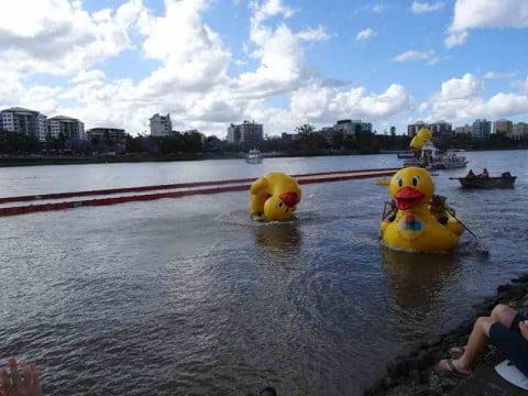 Duck race 2 b