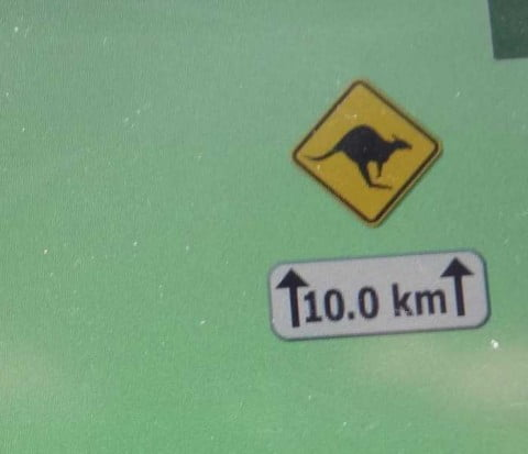 kangaroo warning 2