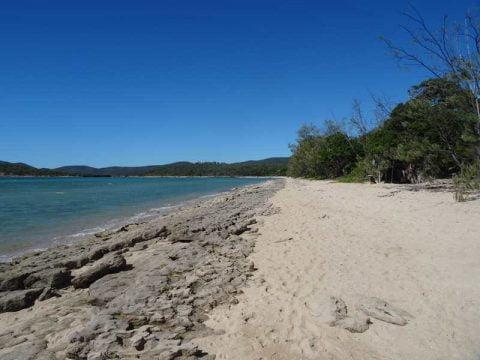 dingo beach