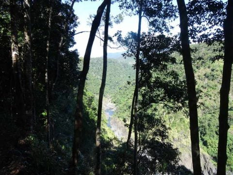 kuranda-views